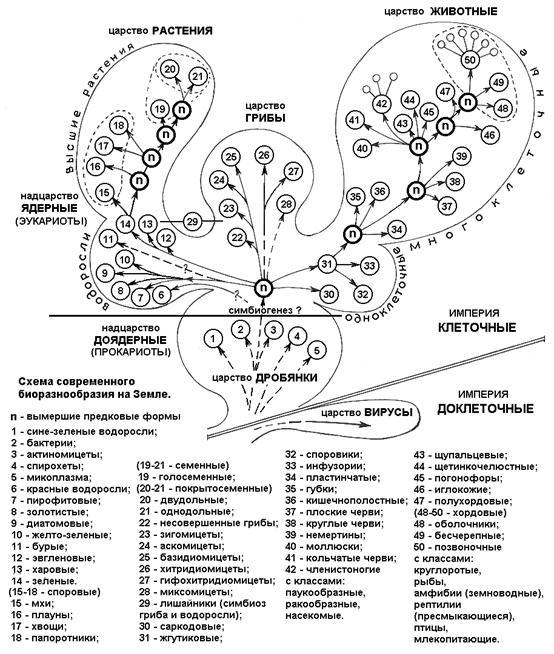 древние группы организмов
